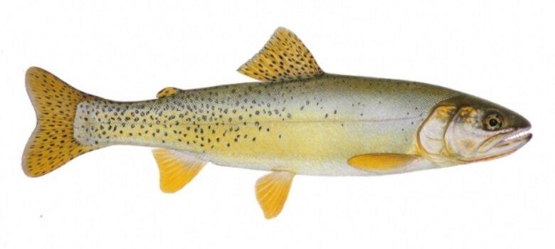 «Хочу эту рыбу — у неё золотой хвост!»