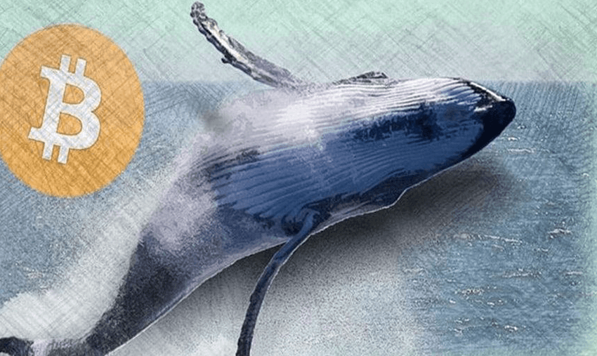 Bitcoin-киты накопили 150 000 BTC за последние 60 дней